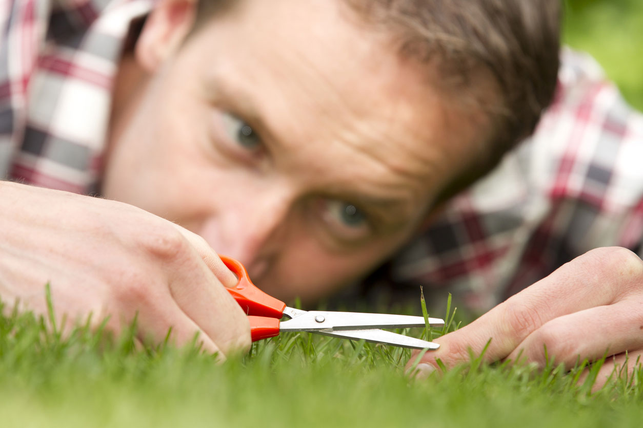 What Does Having a Perfect Lawn Say About You?